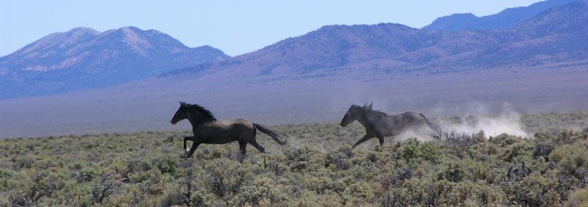 Exploring Lincoln County Nevada Adventures Near Las Vegas