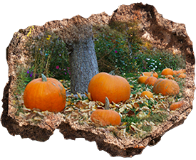 Pumpkins-in-the-Park