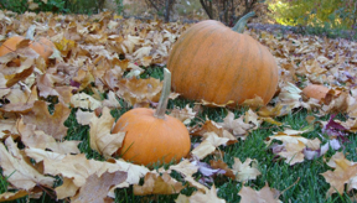 pumpkins in the park2